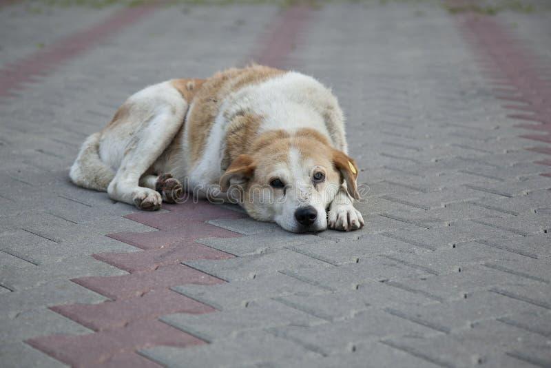 Λυπημένο άστεγο περιπλανώμενο σκυλί στοκ φωτογραφία