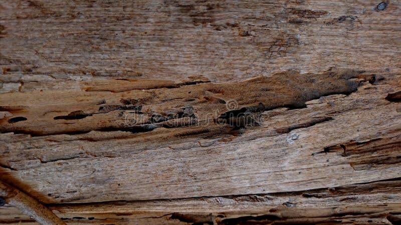 Η υφή του ξύλου του Teak έχει υποστεί ζημιά από τους τερμίτες στοκ φωτογραφία με δικαίωμα ελεύθερης χρήσης