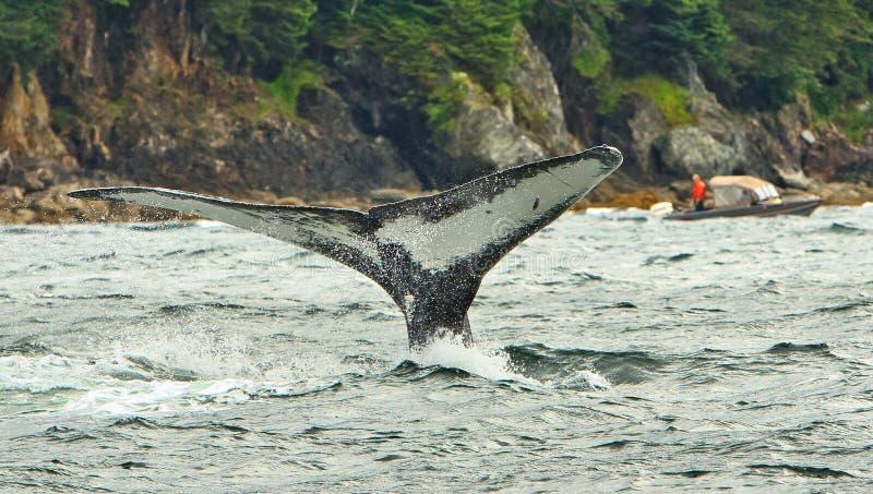 Η φλόγα φαλαινών της Αλάσκας Humpback βουτά 2 στοκ εικόνες με δικαίωμα ελεύθερης χρήσης
