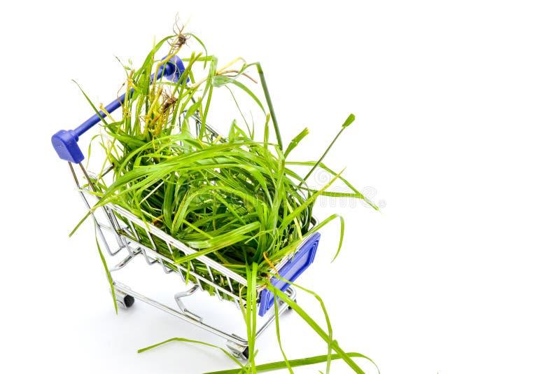 Η φρέσκια επιλεγμένη πράσινη χλόη στο μικρό κάρρο αγορών ι στο άσπρο υπόβαθρο στοκ φωτογραφίες με δικαίωμα ελεύθερης χρήσης