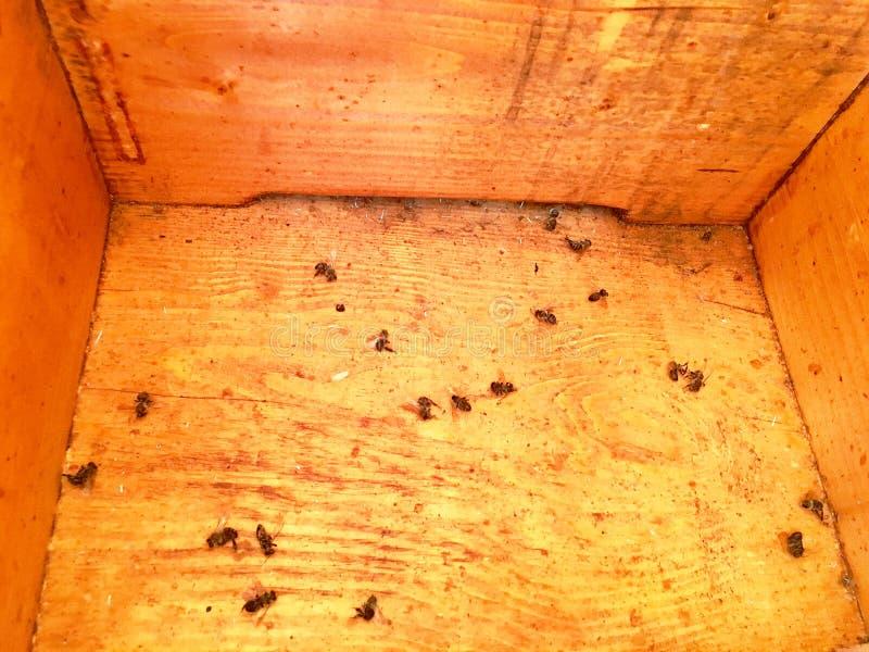 Η φτερωτή μέλισσα πετά αργά στην κυψέλη συλλέγει το νέκταρ στο ιδιωτικό μελισσουργείο στοκ εικόνες