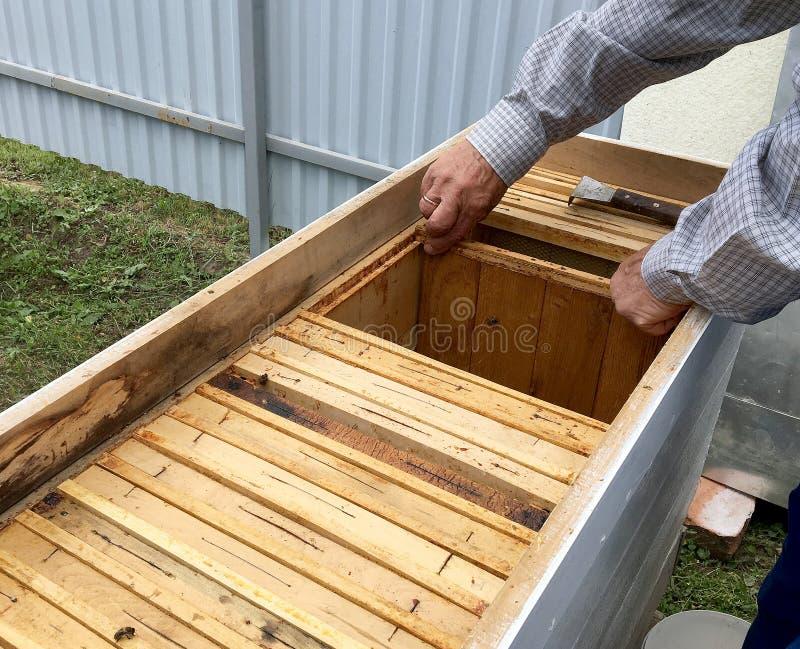 Η φτερωτή μέλισσα πετά αργά στο μελισσοκόμο συλλέγει το νέκταρ στοκ φωτογραφία με δικαίωμα ελεύθερης χρήσης