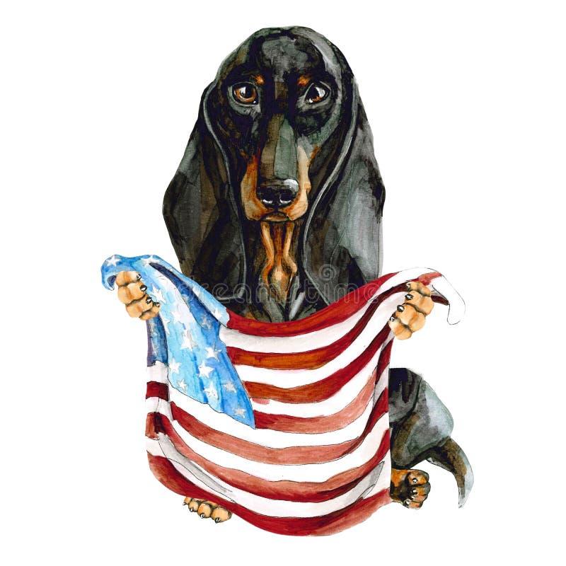 Η φυλή σκυλιών dachshund κρατά στα χέρια του τη σημαία Αμερικανού o   o διανυσματική απεικόνιση