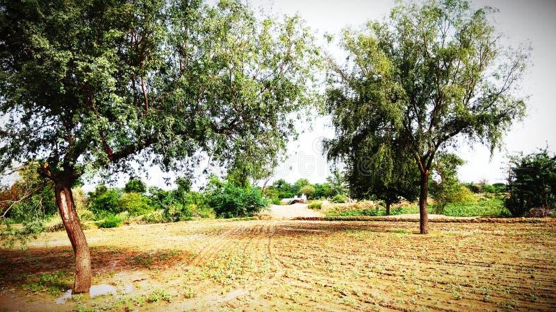Η φυσική ομορφιά της Ινδίας και των δροσερών αγροκτημάτων και των ζώων είναι αγρότες παρακαλώ εκτός από το δέντρο και σώζει τον κ στοκ εικόνες