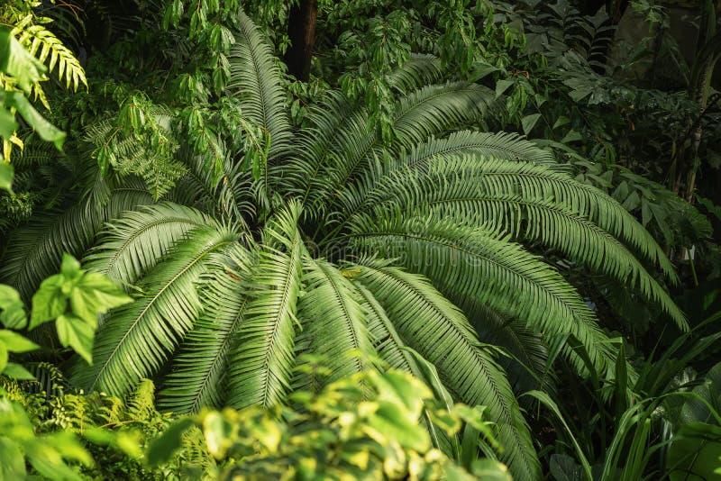 Η φυσική πράσινη τροπική σύσταση του διαφορετικού βεραμάν φύλλου, φοίνικας διακλαδίζεται, φύλλωμα, φρέσκος εξωτικός βοτανικός στοκ εικόνες με δικαίωμα ελεύθερης χρήσης