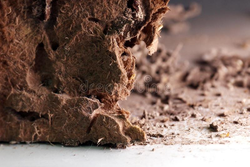 Η φωλιά τερμιτών, υπόβαθρο του τερμίτη φωλιών, έβλαψε ξύλινο πουφαγώθηκε από τον τερμίτη ή την άσπρη εκλεκτική εστίαση μυρμηγκιών στοκ εικόνες