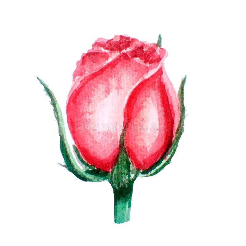 Η φωτεινή απεικόνιση watercolor του ροζ, κοράλλι αυξήθηκε Bourgeon hand-drawn, απομο ελεύθερη απεικόνιση δικαιώματος