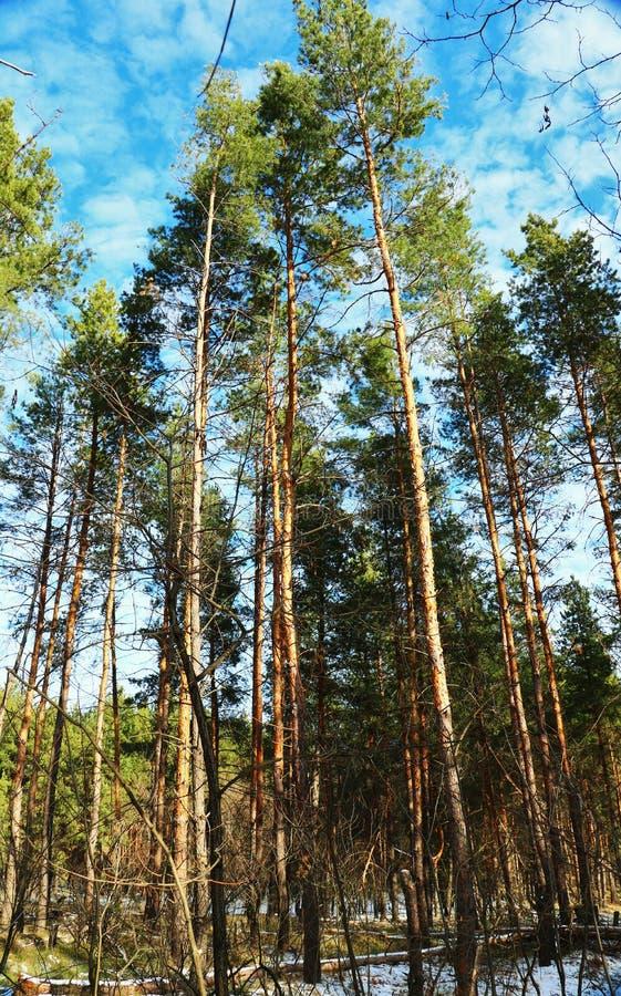 Η φύση ξυπνά σε μας την ανάγκη για την αγάπη! στοκ φωτογραφία με δικαίωμα ελεύθερης χρήσης