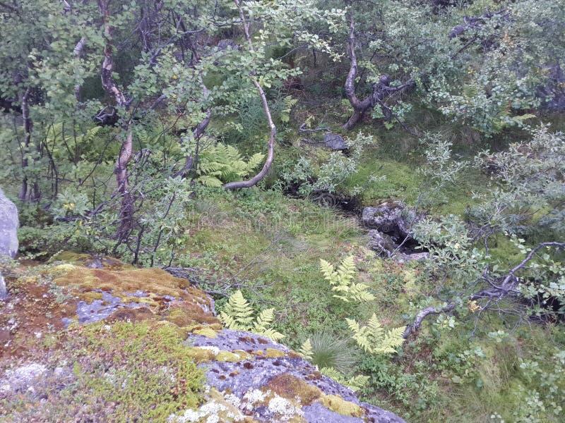 Η φύση του βόρειου καλοκαιριού στοκ εικόνες με δικαίωμα ελεύθερης χρήσης