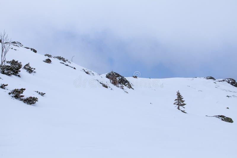 Η φύση των υψηλών βουνών στοκ εικόνες