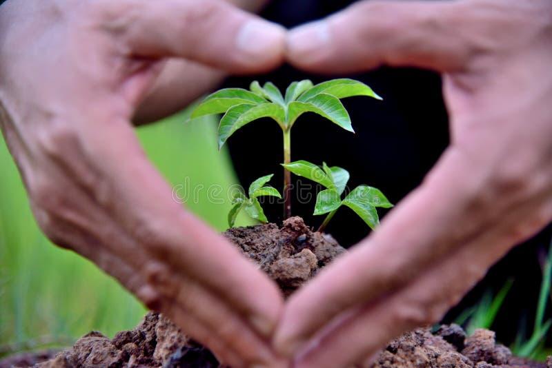 Η φύση φυτεύει τη διαθέσιμη καρδιά σημαδιών χεριών, γήινες έννοιες στοκ εικόνες