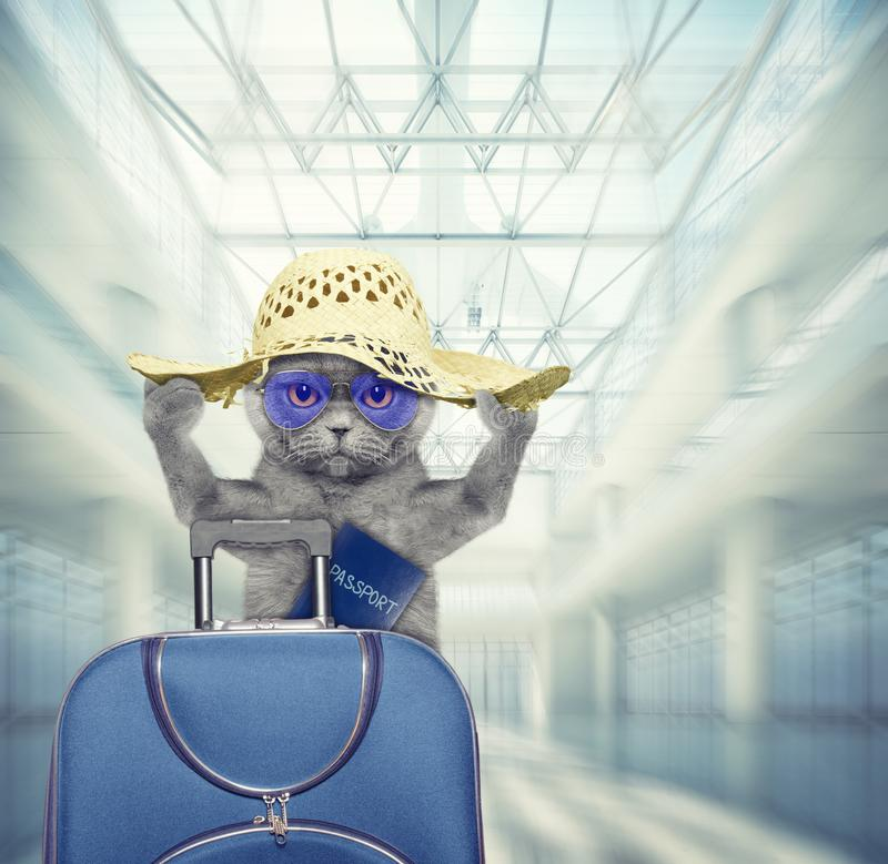 Η χαριτωμένη γάτα περιμένει στον αερολιμένα με την μπλε βαλίτσα και το διαβατήριο r στοκ φωτογραφία με δικαίωμα ελεύθερης χρήσης