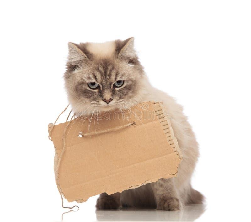 Η χαριτωμένη γκρίζα γάτα επαιτών φορά ένα σημάδι χαρτοκιβωτίων στοκ φωτογραφία