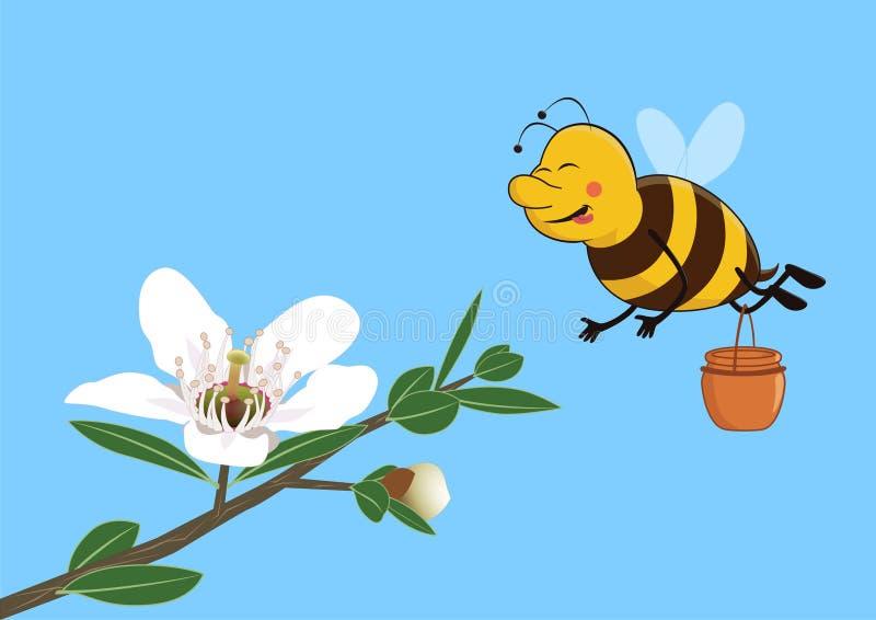 Η χαριτωμένη μέλισσα συλλέγει το μέλι από το λουλούδι manuka ελεύθερη απεικόνιση δικαιώματος