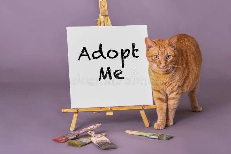 Η χαριτωμένη πορτοκαλιά τιγρέ γάτα που υπερασπίζεται το σημάδι με Adopt με χρωμάτισε στο σημάδι στοκ εικόνα με δικαίωμα ελεύθερης χρήσης