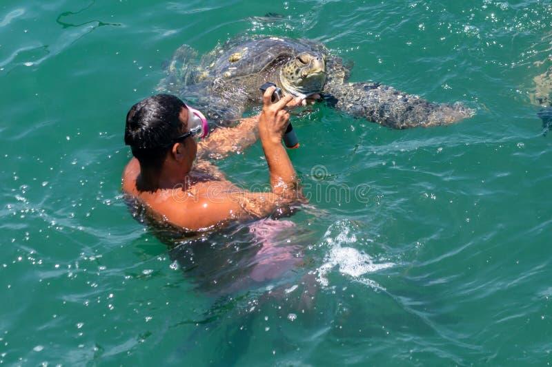Η χελώνα θάλασσας προεξέχει το κεφάλι της από το νερό στοκ εικόνες με δικαίωμα ελεύθερης χρήσης