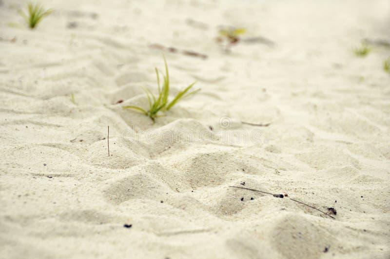 Η χελώνα θάλασσας ακολουθεί το άσπρο κοκκώδες κυματισμένο υπόβαθρο σύστασης άμμου στοκ φωτογραφίες με δικαίωμα ελεύθερης χρήσης