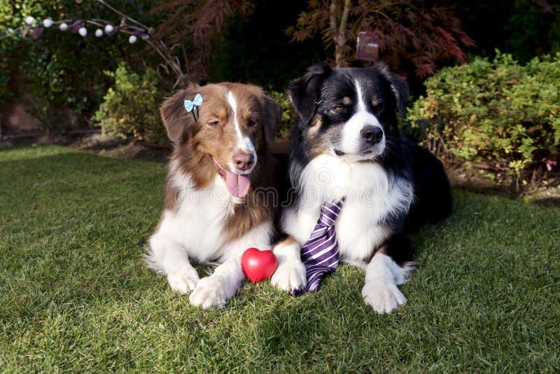 Η χλόη σκυλιών αγάπης ζεύγους που βάζει την ευτυχή ημέρα βαλεντίνων γιορτάζει τον εννοιολογικό κήπο αστείο στοκ φωτογραφίες