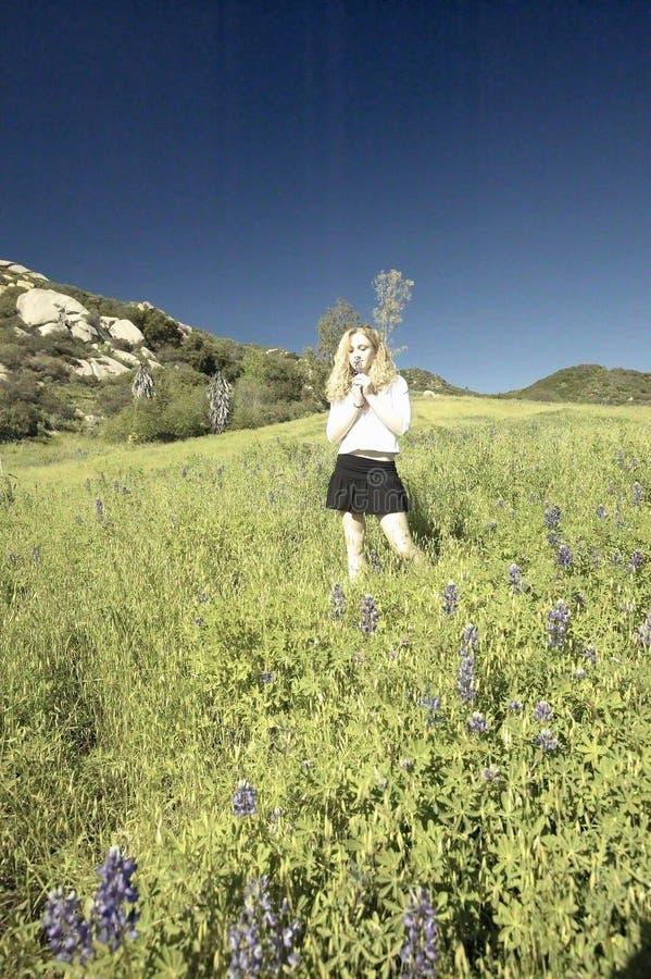 Η ψηφιακά αλλαγμένη, υψηλή εικόνα αντίθεσης του ξανθού περπατήματος κοριτσιών των πράσινων τομέων που γεμίζουν μέσω με το lupine  στοκ εικόνες με δικαίωμα ελεύθερης χρήσης