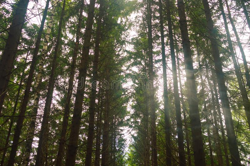 Η όμορφη άποψη του θερινού καθαρού δάσους διατήρησε τις άγριες θέσεις στοκ φωτογραφίες με δικαίωμα ελεύθερης χρήσης