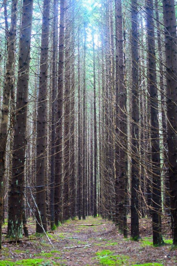 Η όμορφη άποψη του θερινού καθαρού δάσους διατήρησε τις άγριες θέσεις στοκ φωτογραφία με δικαίωμα ελεύθερης χρήσης