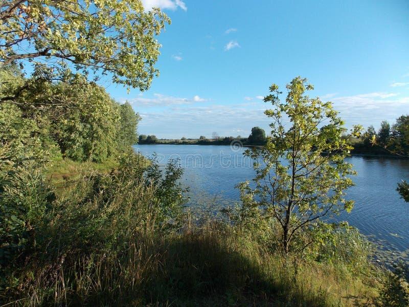 Η όμορφη άποψη των δέντρων στην τράπεζα της δασικής λίμνης στοκ εικόνες