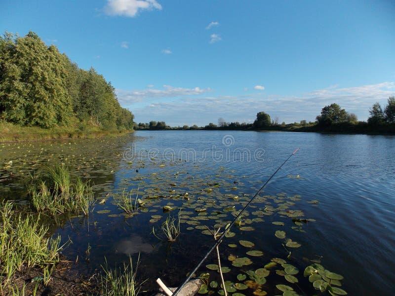 Η όμορφη άποψη των δέντρων στην τράπεζα της μεγάλης δασικής λίμνης 2 στοκ εικόνες με δικαίωμα ελεύθερης χρήσης