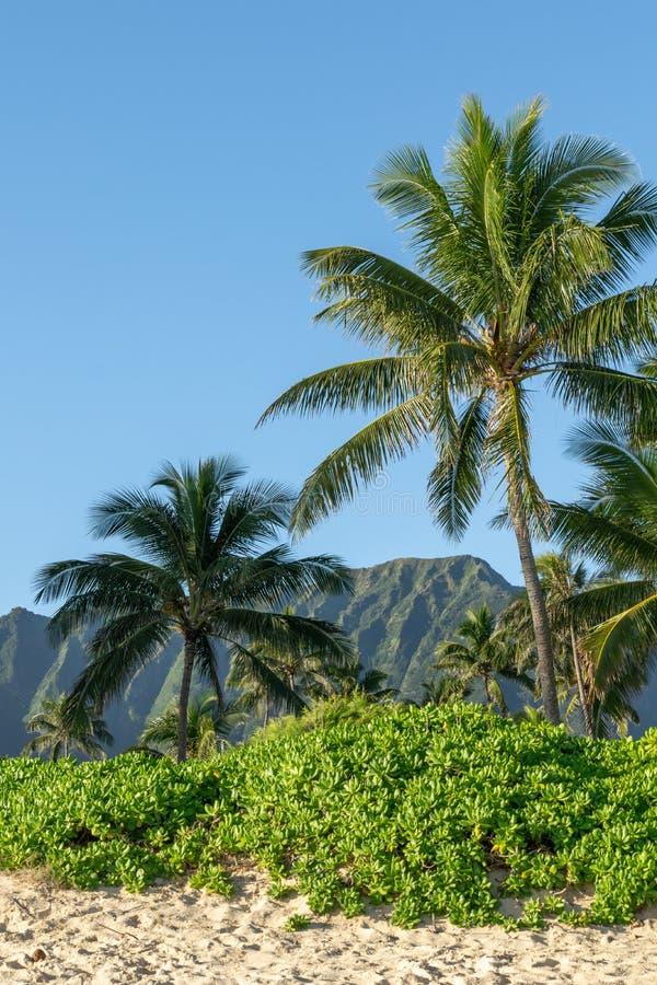 Η όμορφη άποψη των εγκαταστάσεων, οι φοίνικες και ένα βουνό κυμαίνονται στην παραλία Waimanalo, ανατολικό Oahu, Χαβάη, ΗΠΑ Οι μακ στοκ εικόνες