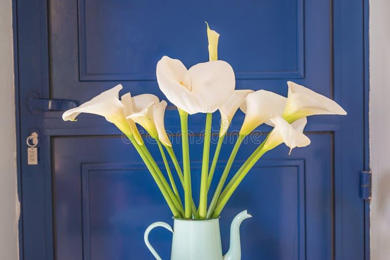 Η όμορφη ανθοδέσμη άσπρο calla arums ανθίζει στο εκλεκτής ποιότητας δοχείο καφέ ενάντια στην μπλε πόρτα στοκ εικόνες