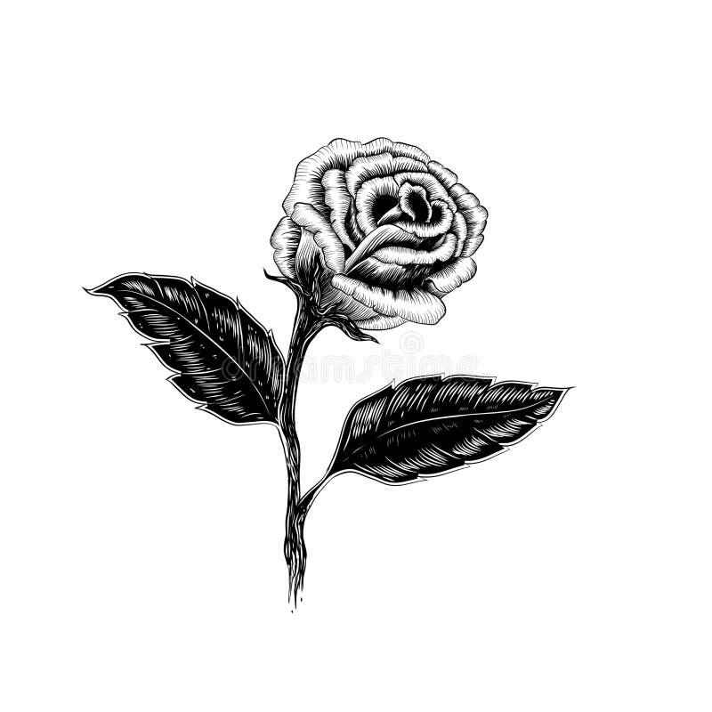 Η όμορφη γραπτή ανθοδέσμη αυξήθηκε και φύλλα Floral arrang απεικόνιση αποθεμάτων