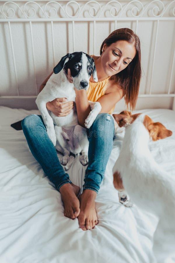 Η όμορφη γυναίκα με τη λήψη δύο σκυλιών φροντίζει αυτοί στο κρεβάτι Ένα κουτάβι και ο Jack Russell του Λαμπραντόρ στοκ φωτογραφία
