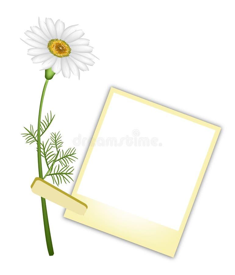 Η όμορφη λευκιά Daisy με τις κενές φωτογραφίες ελεύθερη απεικόνιση δικαιώματος