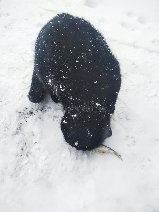 Η όμορφη μαύρη γάτα τρώει ένα ψάρι στο χιόνι στοκ εικόνες με δικαίωμα ελεύθερης χρήσης