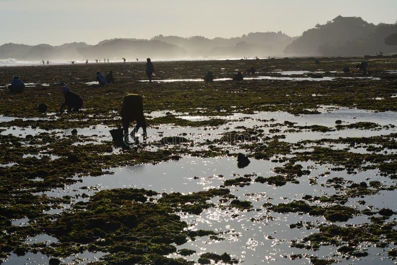Η όμορφη παραλία στην Τζοτζακάρτα, Ινδονησία στοκ εικόνες με δικαίωμα ελεύθερης χρήσης