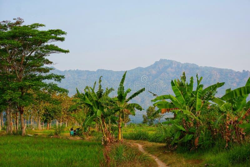 Η όμορφη σειρά βουνών βλέπει από τη μέση του πράσινου τομέα ρυζιού στοκ εικόνες με δικαίωμα ελεύθερης χρήσης