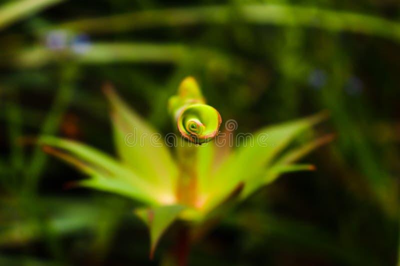 Η όμορφη φύση είναι τόσο λεπτή στοκ εικόνες