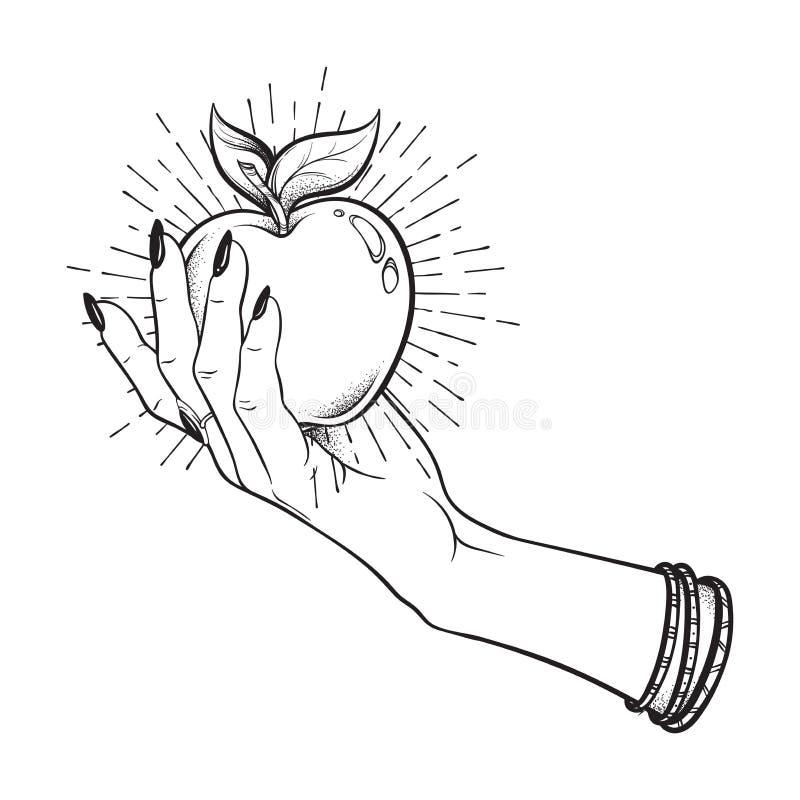 Η Apple στο θηλυκό χέρι απομόνωσε συρμένη τη χέρι τέχνη γραμμών και τη διανυσματική απεικόνιση εργασίας σημείων Αυτοκόλλητη ετικέ ελεύθερη απεικόνιση δικαιώματος