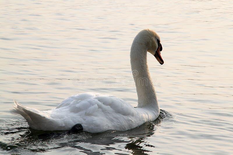 Η Dawn στη λίμνη στοκ εικόνες με δικαίωμα ελεύθερης χρήσης