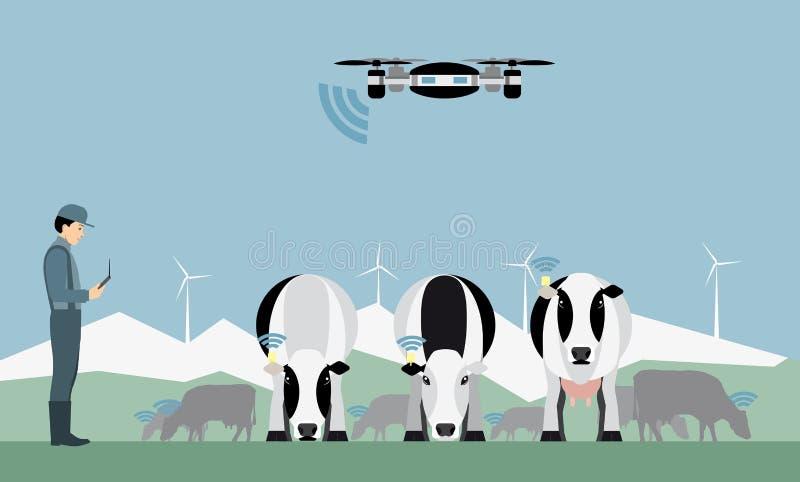 Η Farmer με τον κηφήνα μετρά τις αγελάδες ελεύθερη απεικόνιση δικαιώματος