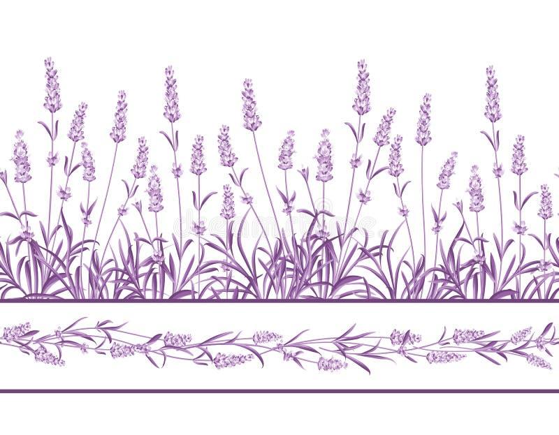 Η Lavender άνευ ραφής γραμμή πλαισίων διανυσματική απεικόνιση