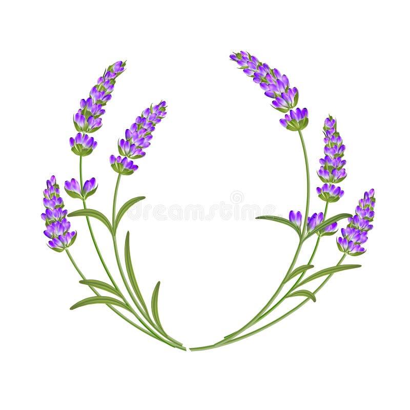 Η lavender γιρλάντα απεικόνιση αποθεμάτων