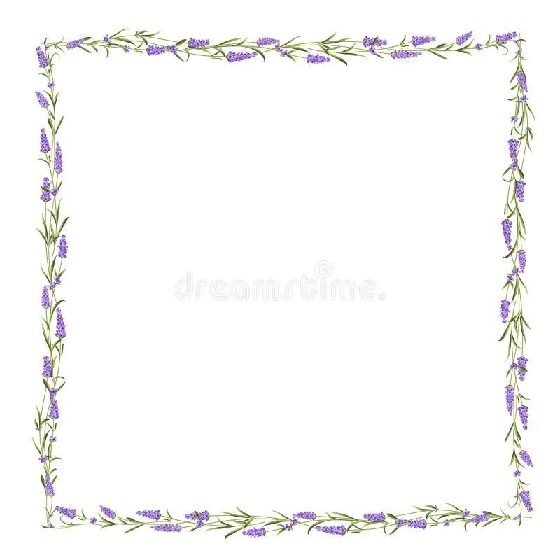 Η Lavender γραμμή πλαισίων απεικόνιση αποθεμάτων