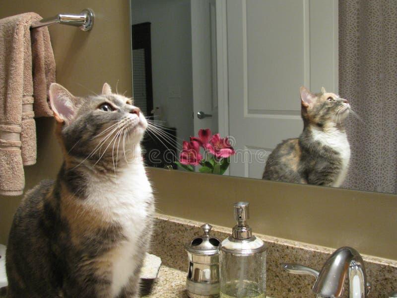 Η Lola προσεύχεται στοκ εικόνα