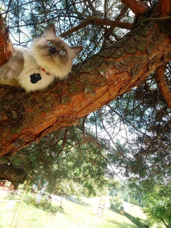 Η Luna σκέφτεται σε ένα δέντρο στοκ φωτογραφία με δικαίωμα ελεύθερης χρήσης