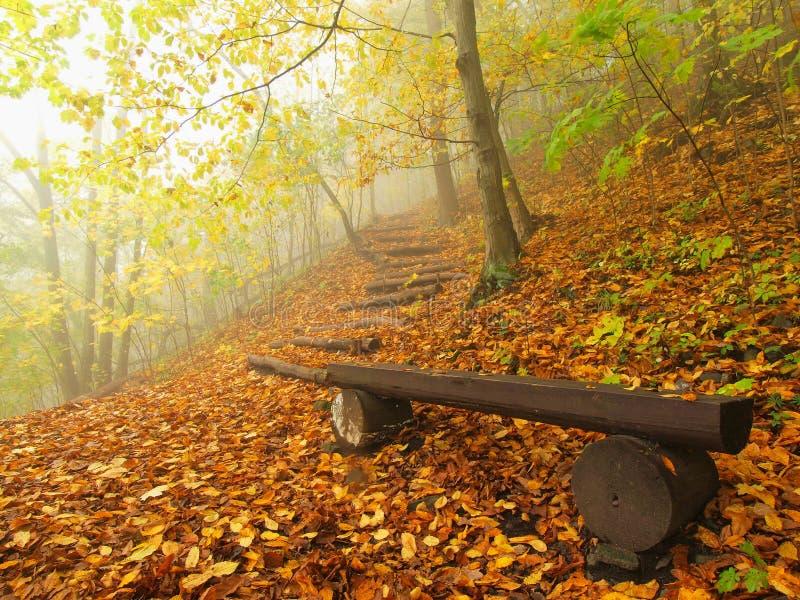 Η misty και ηλιόλουστη χαραυγή φθινοπώρου στο δασικό, παλαιό εγκαταλειμμένο πάγκο οξιών κάτω από τα δέντρα Ομίχλη μεταξύ των κλάδ στοκ εικόνες με δικαίωμα ελεύθερης χρήσης