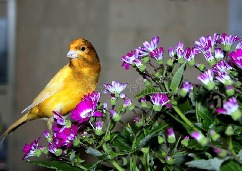 Η Pet cenar είναι συγκλονίζω με τα υπεριώδη λουλούδια στοκ εικόνες