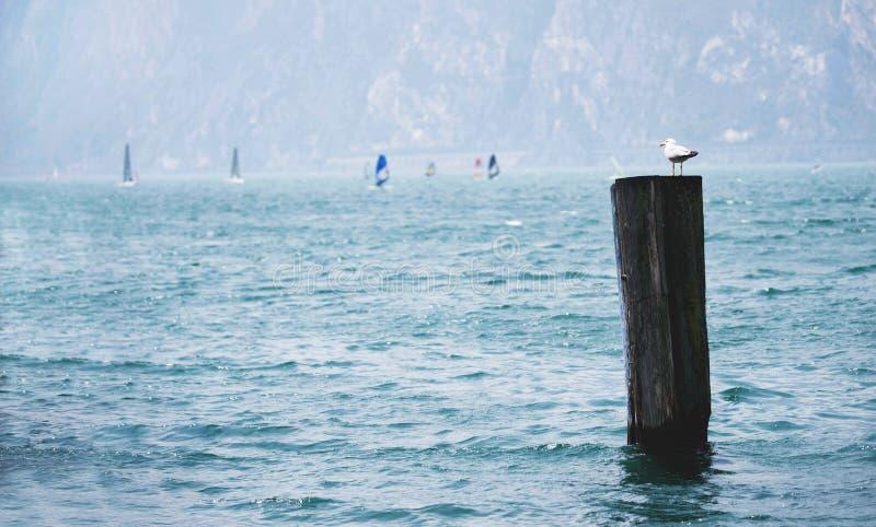 Η Seagull συνεδρίαση μπροστά από τα windsurfers στοκ φωτογραφία