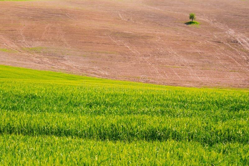 Η Tuscan επαρχία στοκ φωτογραφία με δικαίωμα ελεύθερης χρήσης