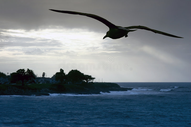 θάλασσα γλάρων παραλιών στοκ φωτογραφία