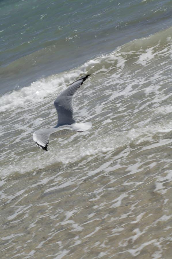 Download θάλασσα γλάρων στοκ εικόνες. εικόνα από ζωηρόχρωμος, φύση - 13175788